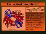 tvar a struktura b lkovin