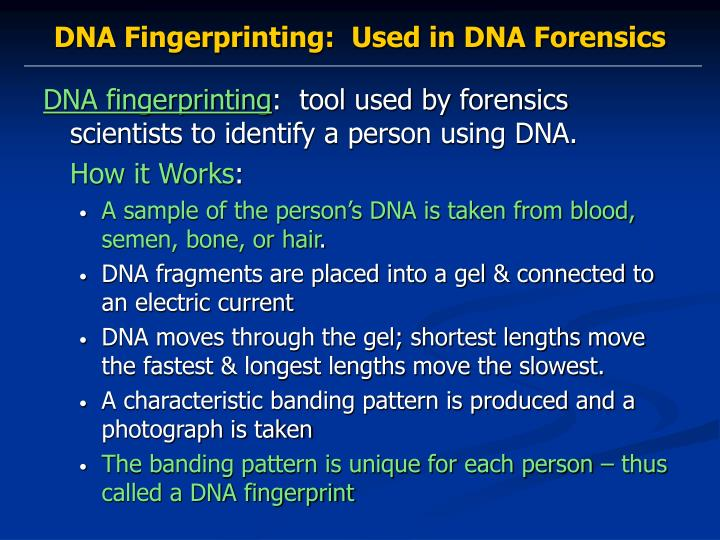 how is dna used to identify a crime suspect Start studying dna fingerprinting and forensic science learn vocabulary, terms, and more with flashcards, games, and other study tools.