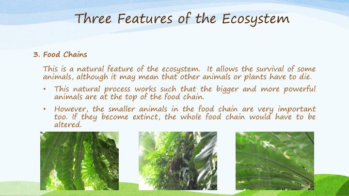 Three Features of the Ecosystem