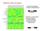 results heart muscle1