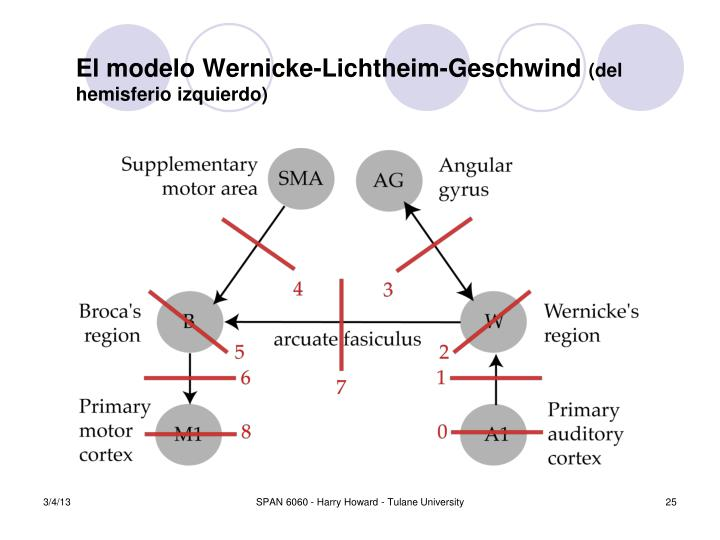 El modelo Wernicke-Lichtheim-Geschwind