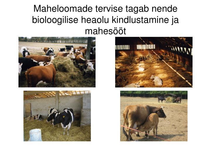 Maheloomade tervise tagab nende bioloogilise heaolu kindlustamine ja mahesööt