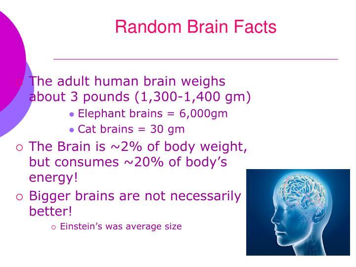 Random brain facts2