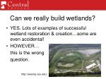 can we really build wetlands
