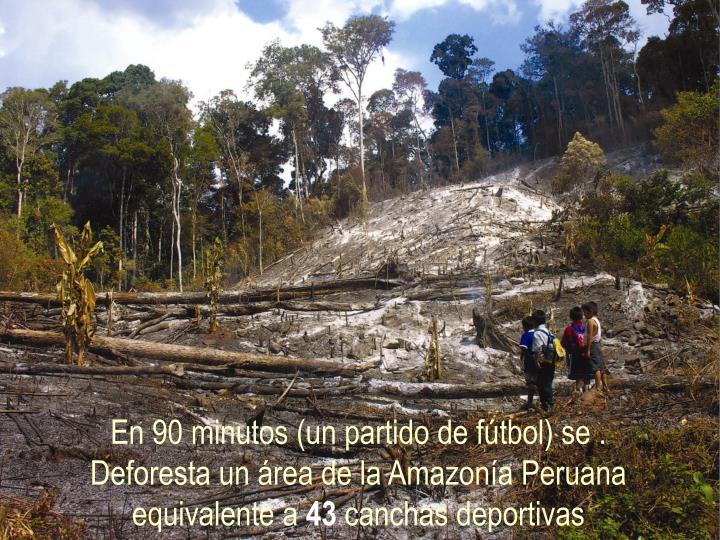 En 90 minutos (un partido de fútbol) se .                                  Deforesta un área de la Amazonía Peruana