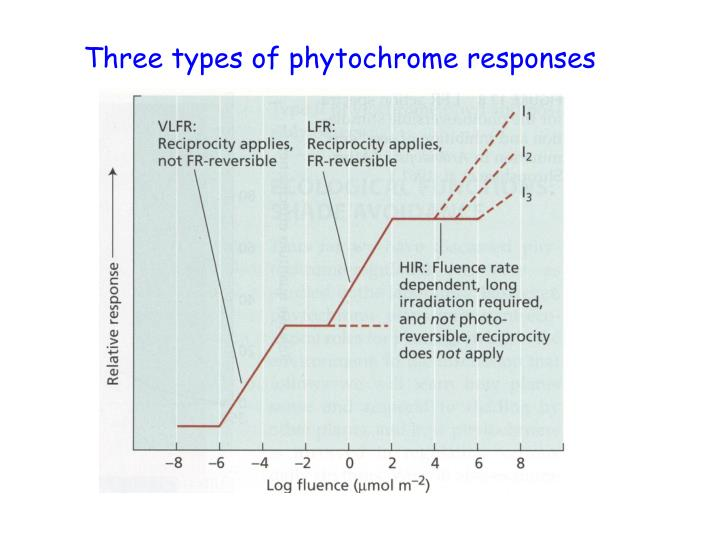 Three types of phytochrome responses