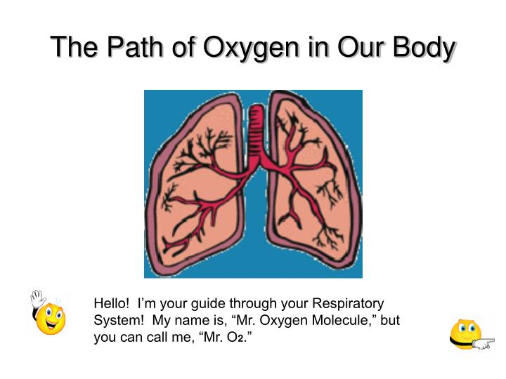 the path of oxygen in our body n.