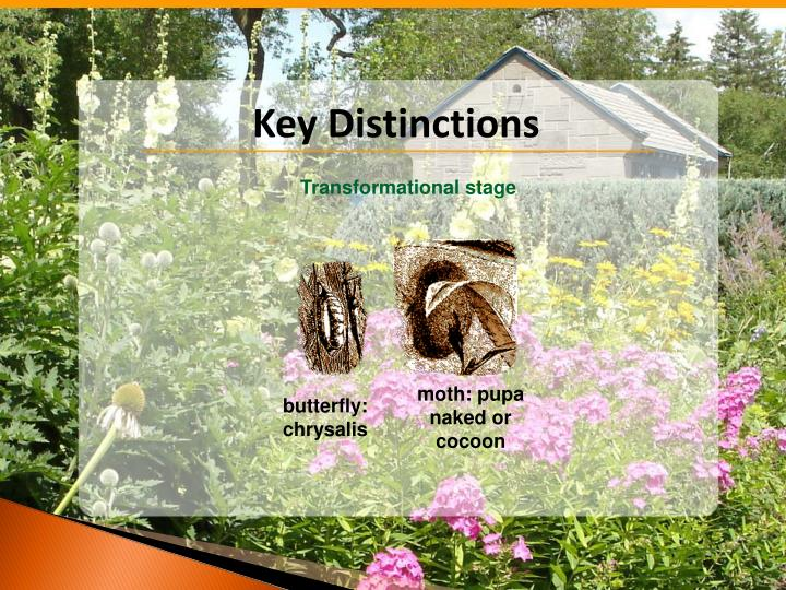 Key Distinctions