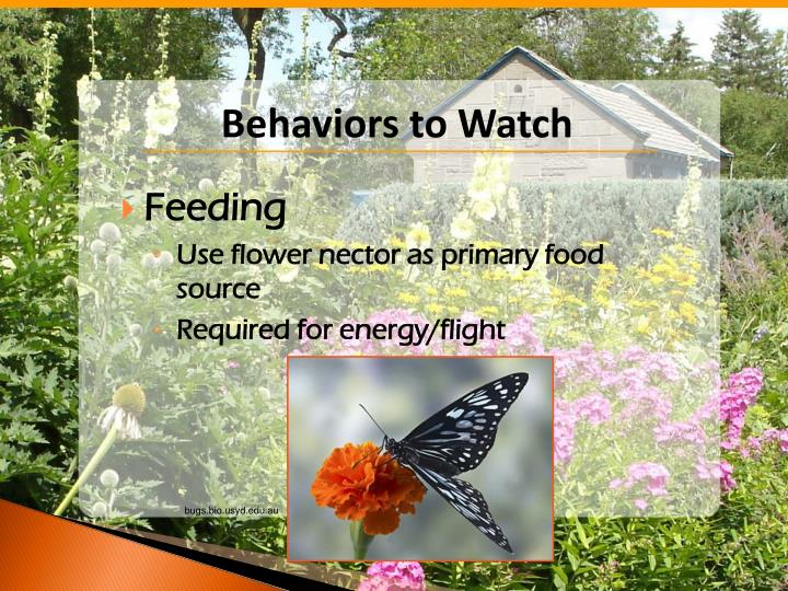 Behaviors to Watch