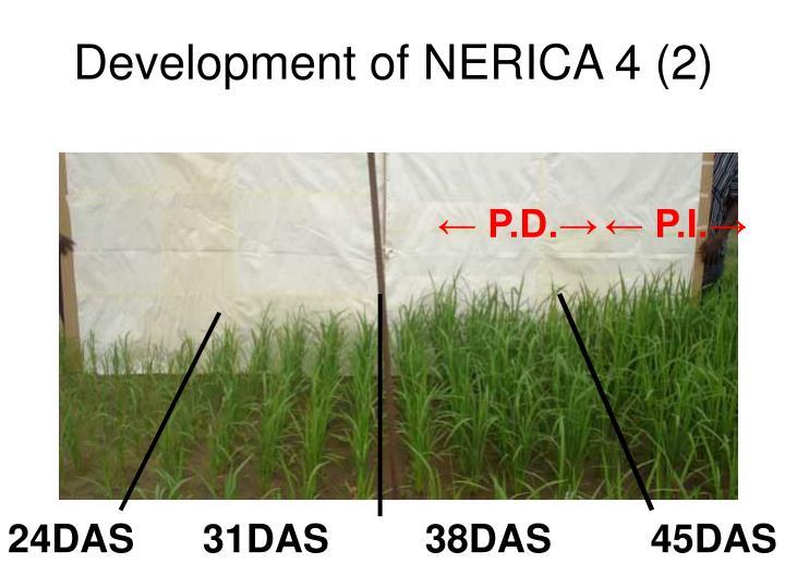 Development of NERICA 4 (2)