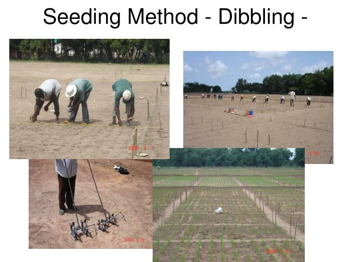Seeding Method - Dibbling -