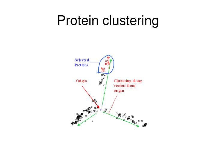 Protein clustering