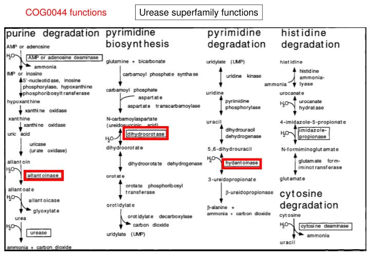 COG0044 functions