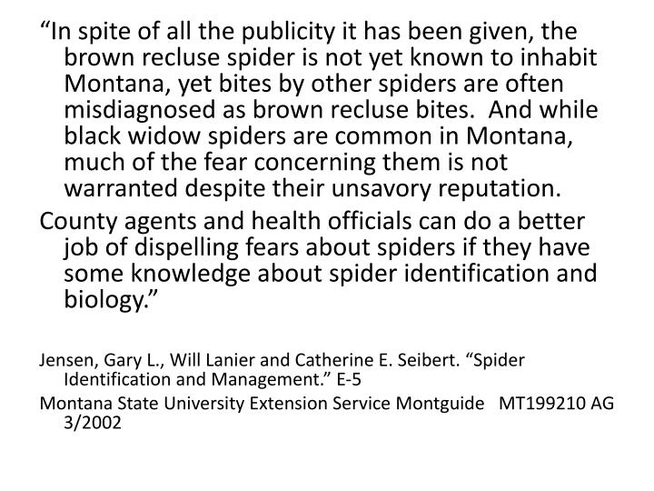 """In spite of all the publicity it has been given, the brown recluse spider is not yet known to inhabit Montana, yet bites by other spiders are often misdiagnosed as brown recluse bites.  And while black widow spiders are common in Montana, much of the fear concerning them is not warranted despite their unsavory reputation."