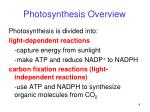 photosynthesis overview2