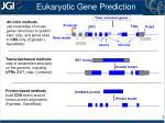 eukaryotic gene prediction