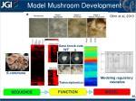 model mushroom development