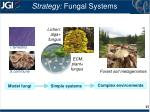 strategy fungal systems