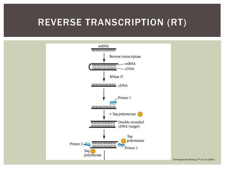 Reverse Transcription (RT)