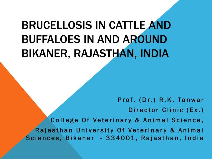 brucellosis in cattle and buffaloes in and around bikaner rajasthan india n.