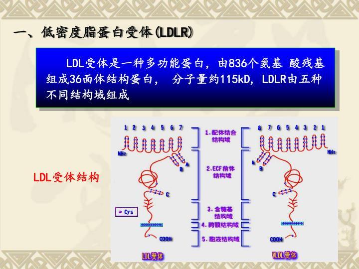 一、低密度脂蛋白受体
