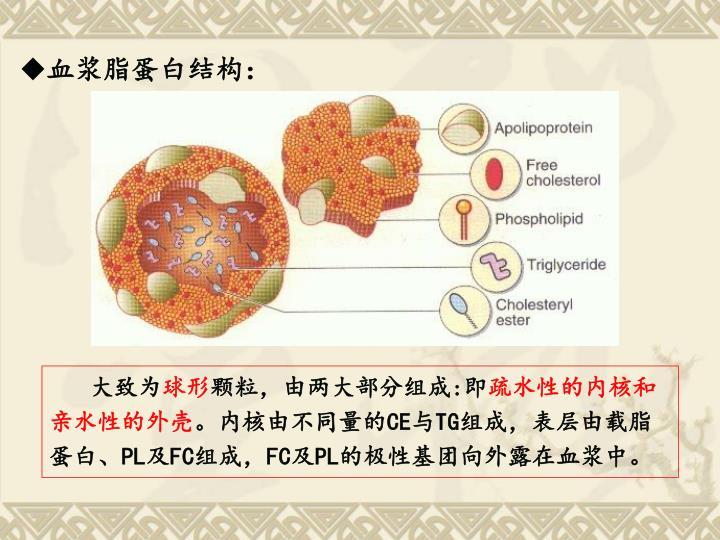 血浆脂蛋白结构: