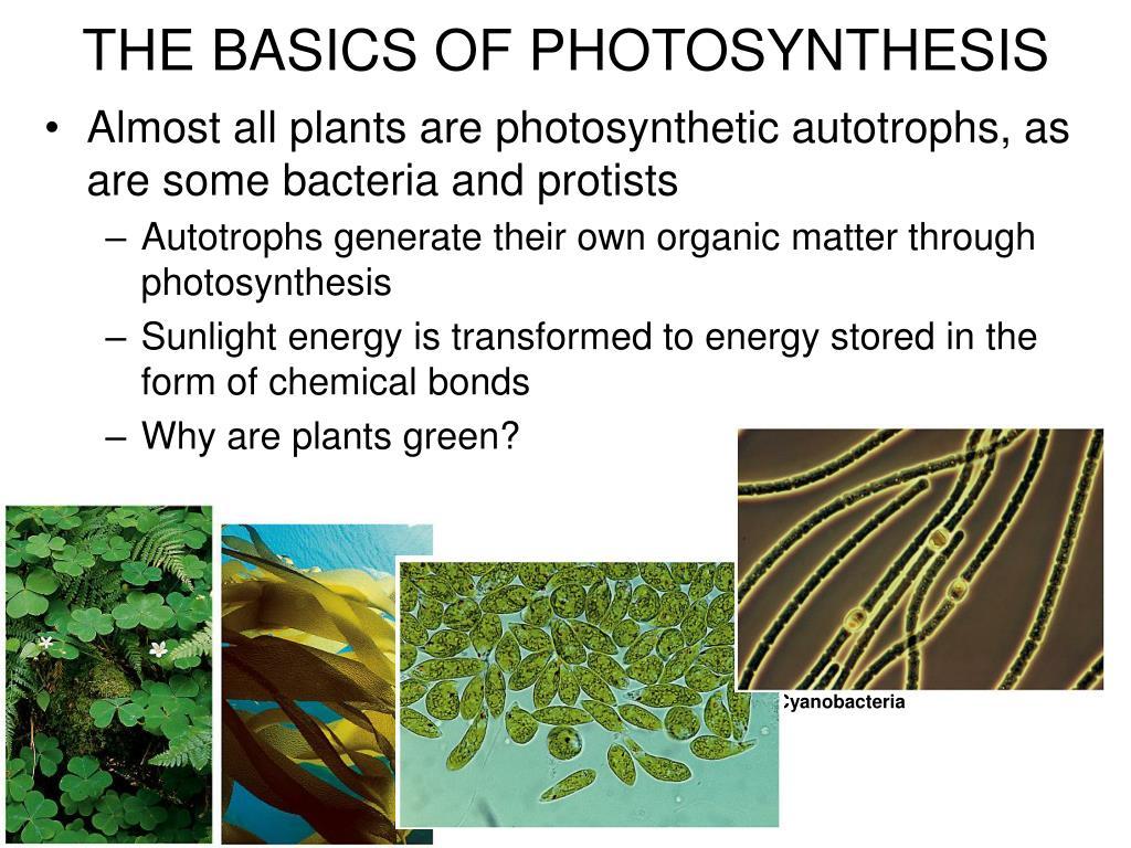 is bacteria an autotroph