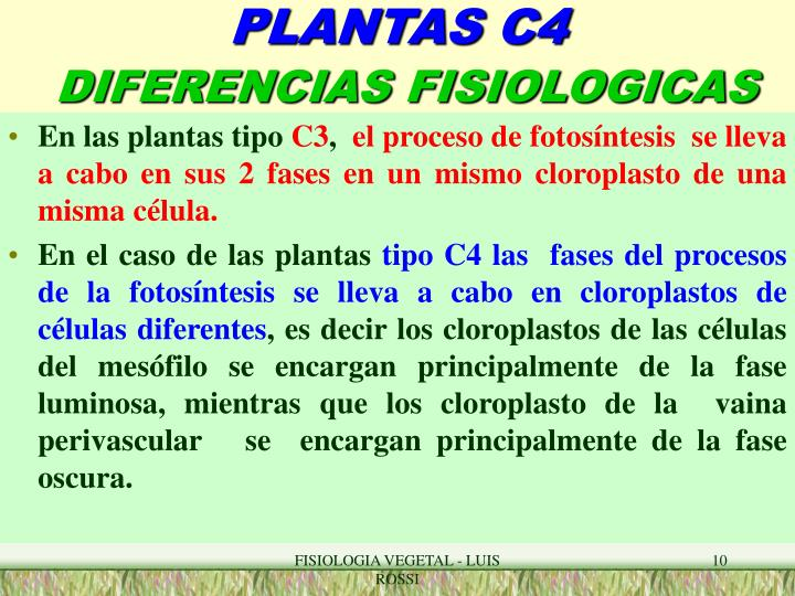PPT - PLANTAS TIPO C4 PowerPoint Presentation - ID:5949393