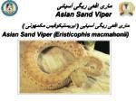 asian sand viper