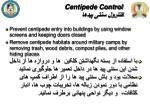centipede control