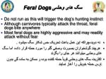 feral dogs1