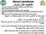 genus latrodectus3