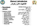 genus latrodectus4