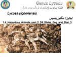 genus lycosa