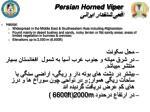 persian horned viper1