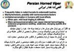 persian horned viper3