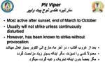 pit viper4