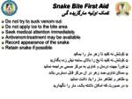snake bite first aid1