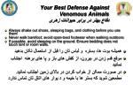 your best defense against venomous animals1