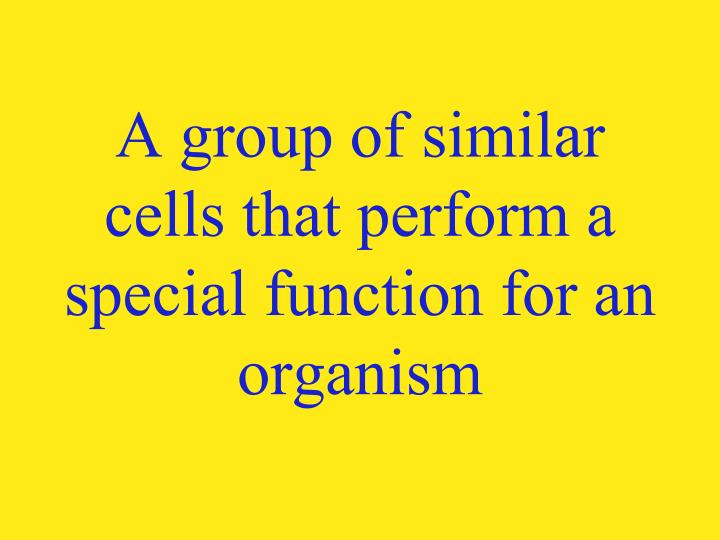 A group of similar cells that perform a special function for an organism