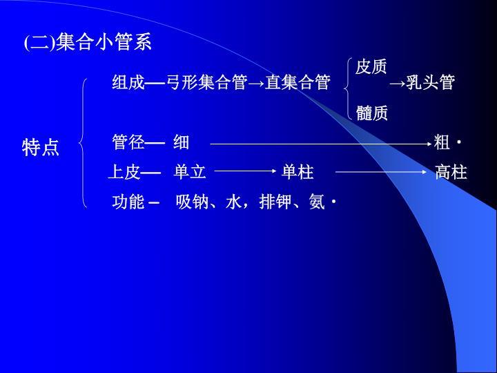 (二)集合小管系
