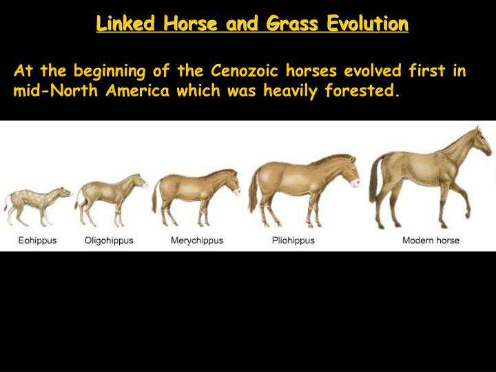 Linked Horse and Grass Evolution