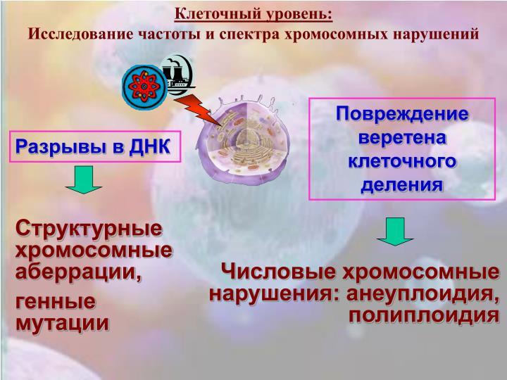 Клеточный уровень: