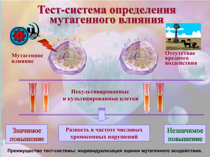 Тест-система определения мутагенного влияния