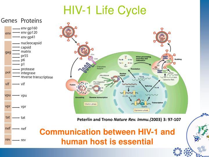 Hiv 1 life cycle