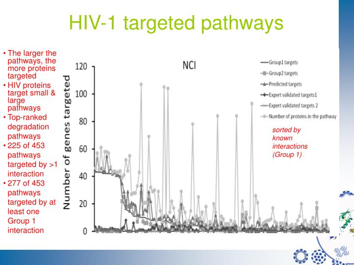 HIV-1 targeted pathways