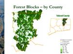 forest blocks by county