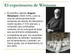 el experimento de wismann