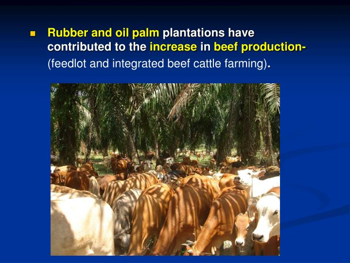 Rubber and oil palm