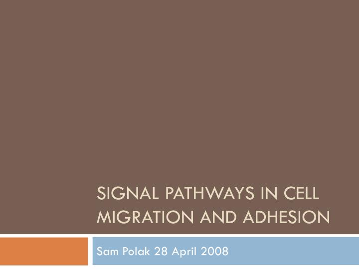 signal pathways in cell migration and adhesion n.